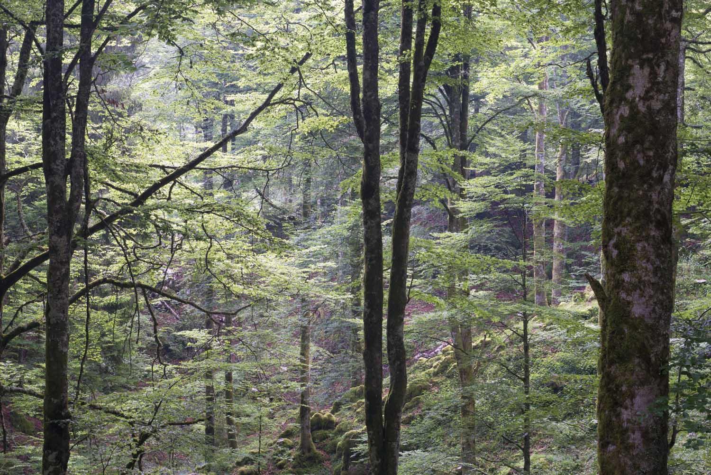maurizio sgualdini foto panorami altopiani boschi